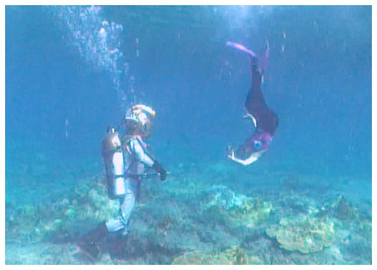 FREEDIVER AND NEMO